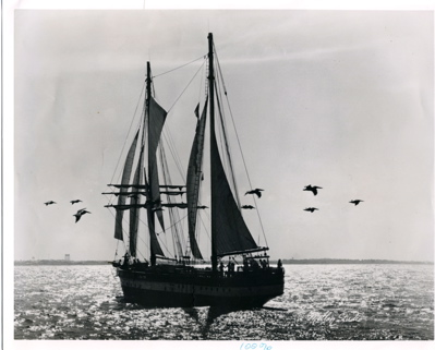 http://www.quick-good-fortune.com/images/explorer-sea-sail-birds.jpg